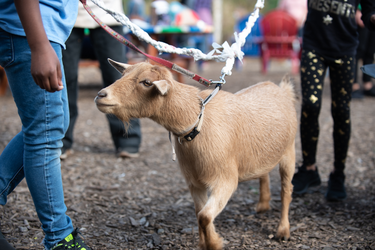 philly goats